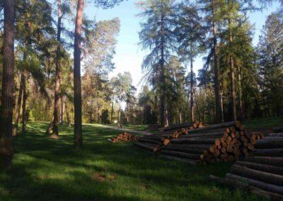 Palouk nedaleko arboreta Řícmanice