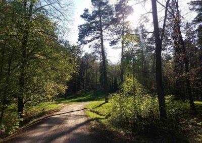 Příchod k palouku u arboreta Řícmanice po lesní cestě Brněnka