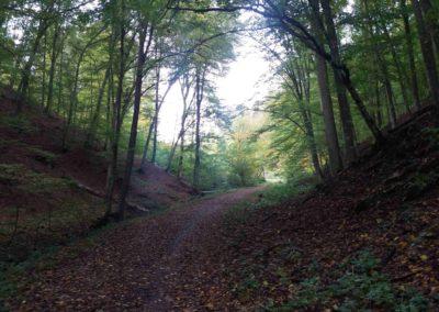 Gangloffova lesní cesta - jihovýchodní část