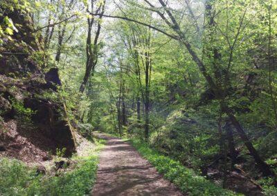 Gangloffova lesní cesta - jihovýchodní část na jaře