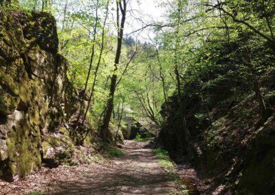 Gangloffova lesní cesta - jihovýchodní začátek / konec na jaře