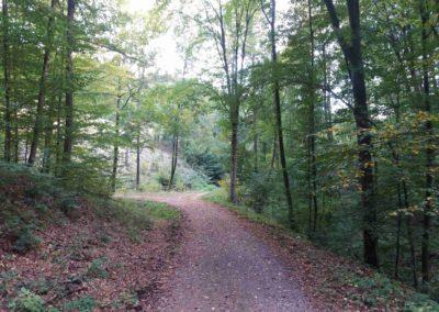 Gangloffova lesní cesta - lesní křižovatka cest - doleva vede Benešova cesta, rovně Gangloffova