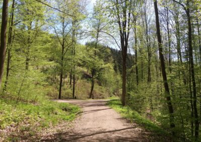 Gangloffova lesní cesta - lesní křižovatka cest na jaře - doleva vede Benešova cesta, rovně Gangloffova