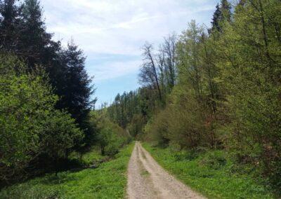 Gangloffova lesní cesta na jaře