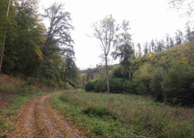 Gangloffova lesní cesta - palouk