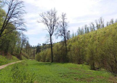 Gangloffova lesní cesta - palouk na jaře