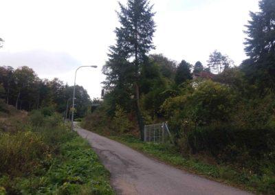Gangloffova lesní cesta - pohled zpět do Útěchova