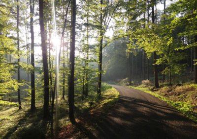 Hra světla na podzim na lesní cestě Schindlerova