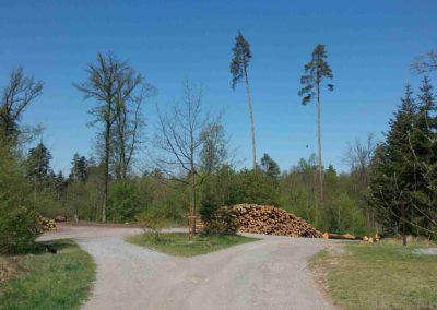 Lesní cesta Červená - křižovatka cest u Liškova kříže
