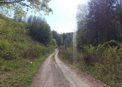 Lesní cesta Barbora - pohled na stoupání