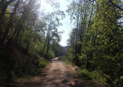Lesní cesta Barbora - závora v Adamově, cedule však chybí