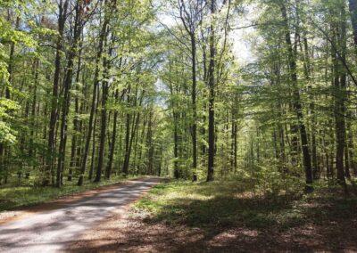 Lesní cesta Březinka během jara
