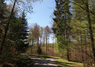 Lesní cesta Březinka - nedaleko silnice z Babic nad Svitavou do Křtin