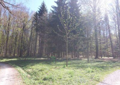 Lesní cesta Březinka - pohled na cestu od silnice z Babic nad Svitavou do Křtin