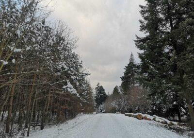 Lesní cesta Brněnka v zimě