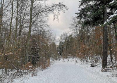 Lesní cesta Brněnka v zimě - klesání ke Konůpkově louce