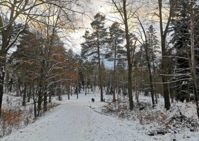 Příchod k palouku u arboreta Řícmanice po lesní cestě Brněnka v zimě