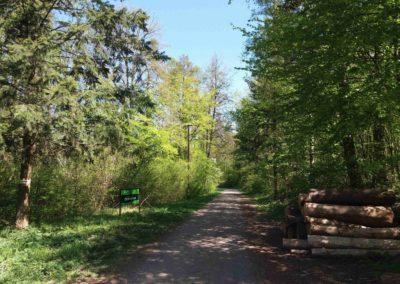 Lesní cesta Červená - začátek u Kopanin