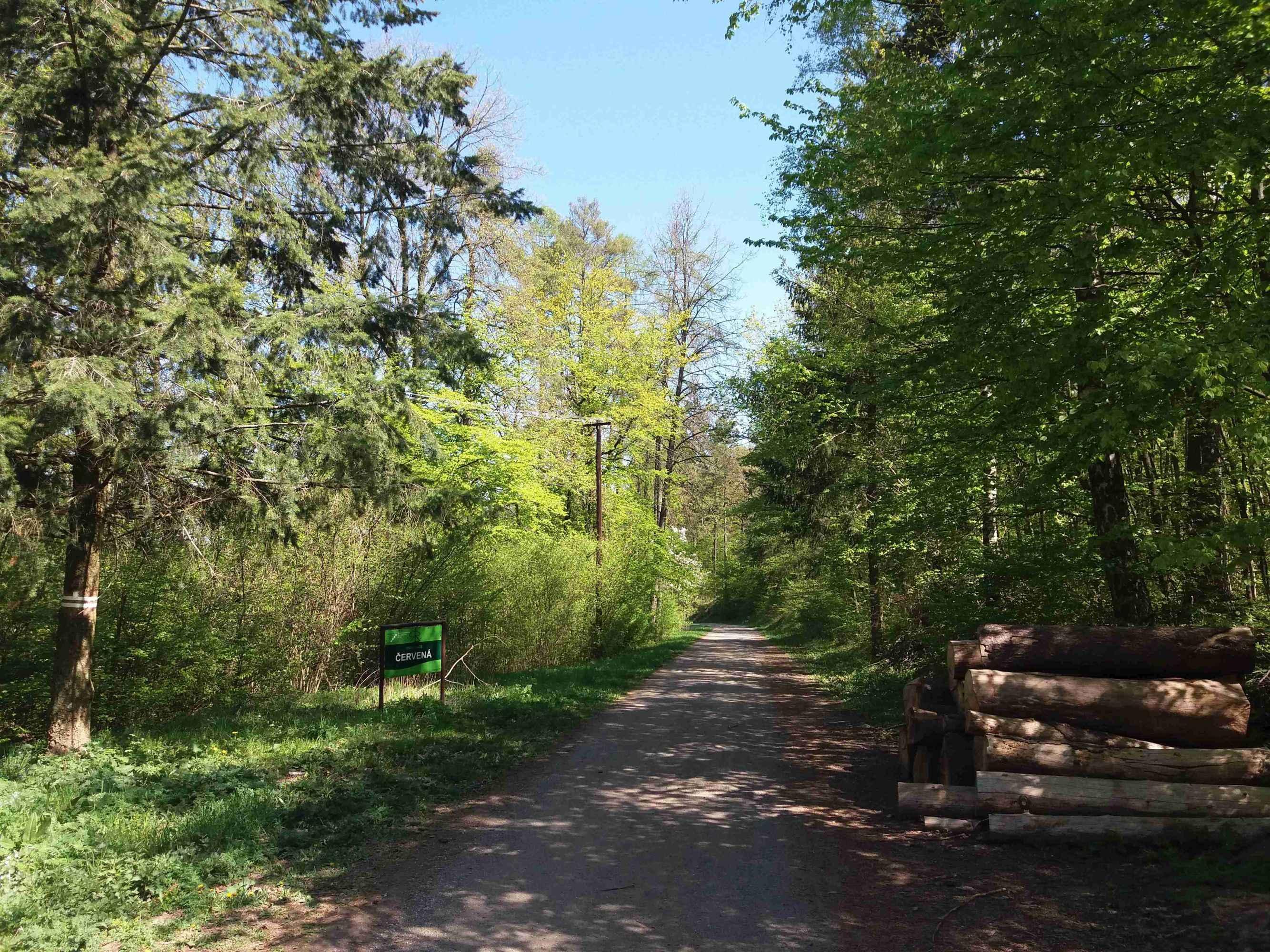 Začátek lesní cesty Červená