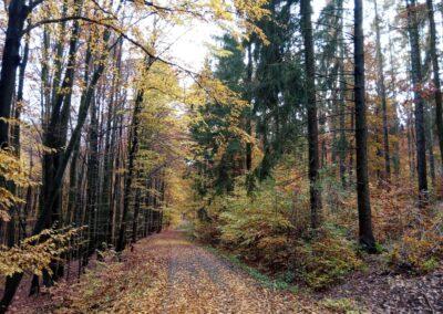 Lesní cesta Coufavá