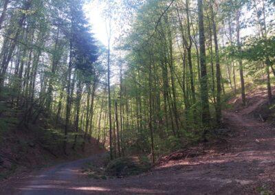 Lesní cesta Coufavá - křižovatka s modrou turistickou trasou Útěchov - Adamov
