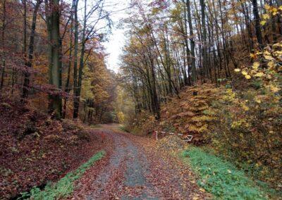 Lesní cesta Coufavá - začátek / konec u Adamova