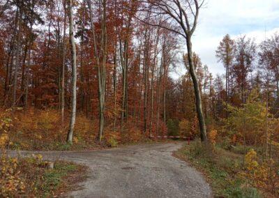 Lesní cesta Coufavá - začátek / konec u silnice Útěchov - Vranov na podzim