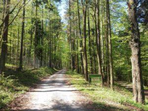 Lesní cesta Doubská - severní začátek