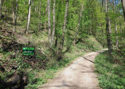 Lesní cesta Doubská - jižní začátek v Josefovském údolí