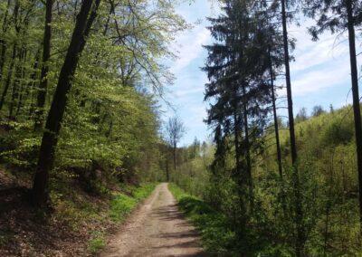 Gangloffova lesní cesta - začátek / konec v Útěchově na jaře