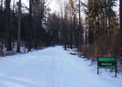 Lesní cesta Hradská - začátek / konec u památníku v zimě