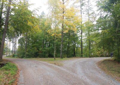Lesní cesta K Hlinkovým dolům - křížení s lesní cestou Pokojná u jezírka Černé hlíny