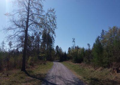 Lesní cesta K Hlinkovým dolům - skorohorská scenérie