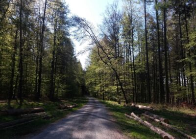 Lesní cesta Klepačovská