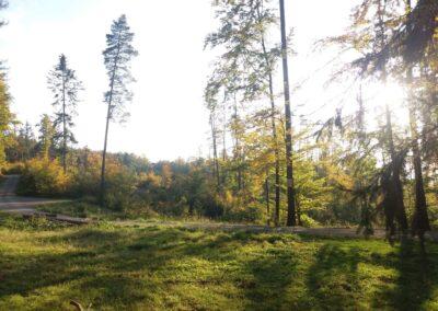 Lesní cesta Klepačovská - pohled na rozcestí Polom