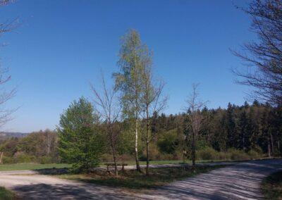 Lesní cesta Klepačovská - posezení nedaleko Olomučan