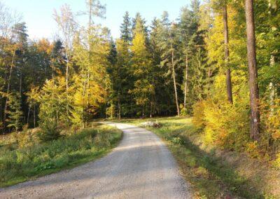Lesní cesta Klepačovská - rozcestí Polom na podzim
