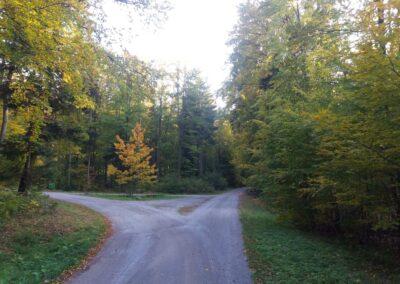 Lesní cesta Klepačovská - rozcestí s lesní cestou Křivá Borovice