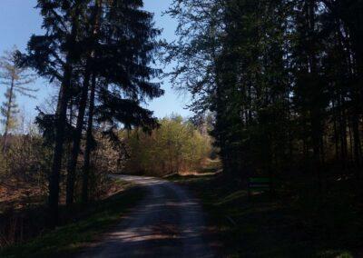 Lesní cesta Klepačovská - začátek / konec nedaleko Olomučan