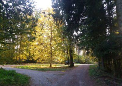 Lesní cesta Klepačovská - začátek / konec u Klepačova