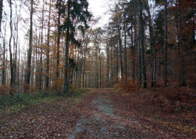 Lesní cesta Kočárová