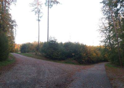 Lesní cesta Kočárová - křížení s lesní cestou Nad Močovou