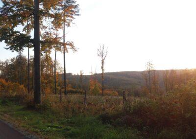 Lesní cesta Kočárová - výhledy do krajiny