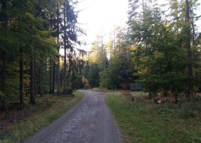 Lesní cesta Křivá Borovice na podzim