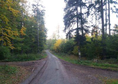Lesní cesta Křivá Borovice - rozcestí modré a červené značky