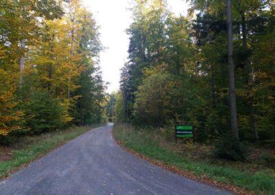 Lesní cesta Křivá Borovice - začátek / konec při lesní cestě Klepačovská