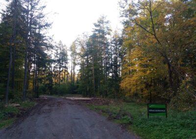 Lesní cesta Křivá Borovice - začátek / konec při silnici Olomučany - Rudice na podzim