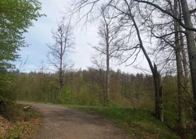 Lesní cesta Kroucená - palouček