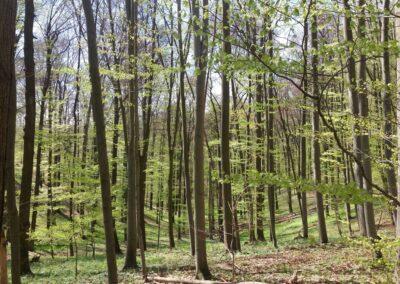 Lesní cesta Kroucená - pohled do přírodní rezervace Coufavá