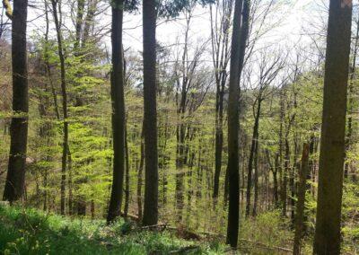 Lesní cesta Kroucená - pohled směrem k lesní cestě Coufavá